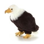 """Aurora 10.5"""" Regal Eagle"""