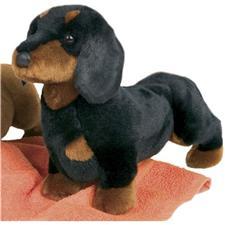 Spats Black & Tan Dachshund Dog