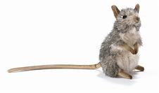"7"" Hansa Elephant Mouse"