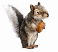 """9"""" Hansa Squirrel Grey"""
