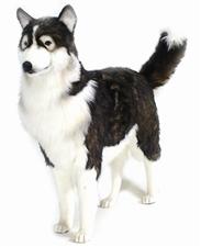 46 inch Hansa Husky Dog Life Size