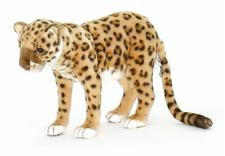 "12"" Hansa Leopard"