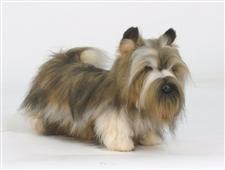 20 inch Hansa Cairn Terrier Stuffed Animal