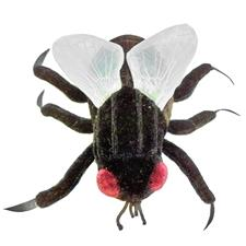 Giant Microbes House Fly