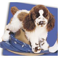 Douglas-16-Ogilvy-Springer-Spaniel-Dog