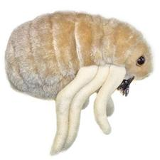 Giant-Microbes-Flea