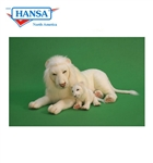 "40"" Hansa White Lion"